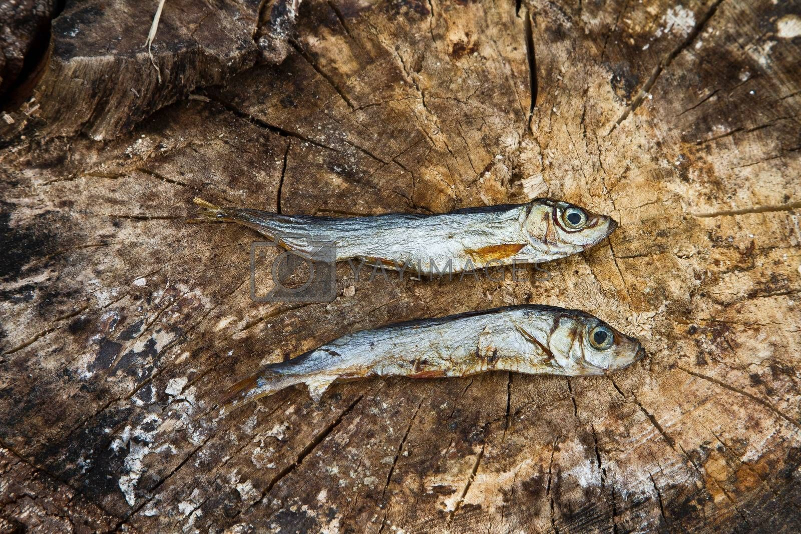 Two small dried fishes on  wood