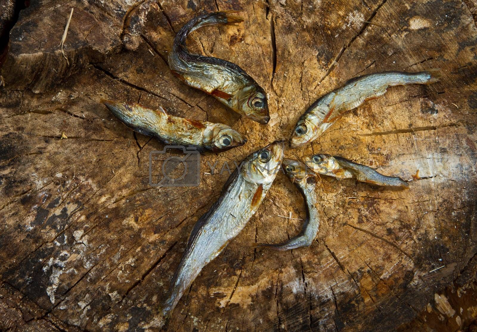 Small dried fishes forming a star