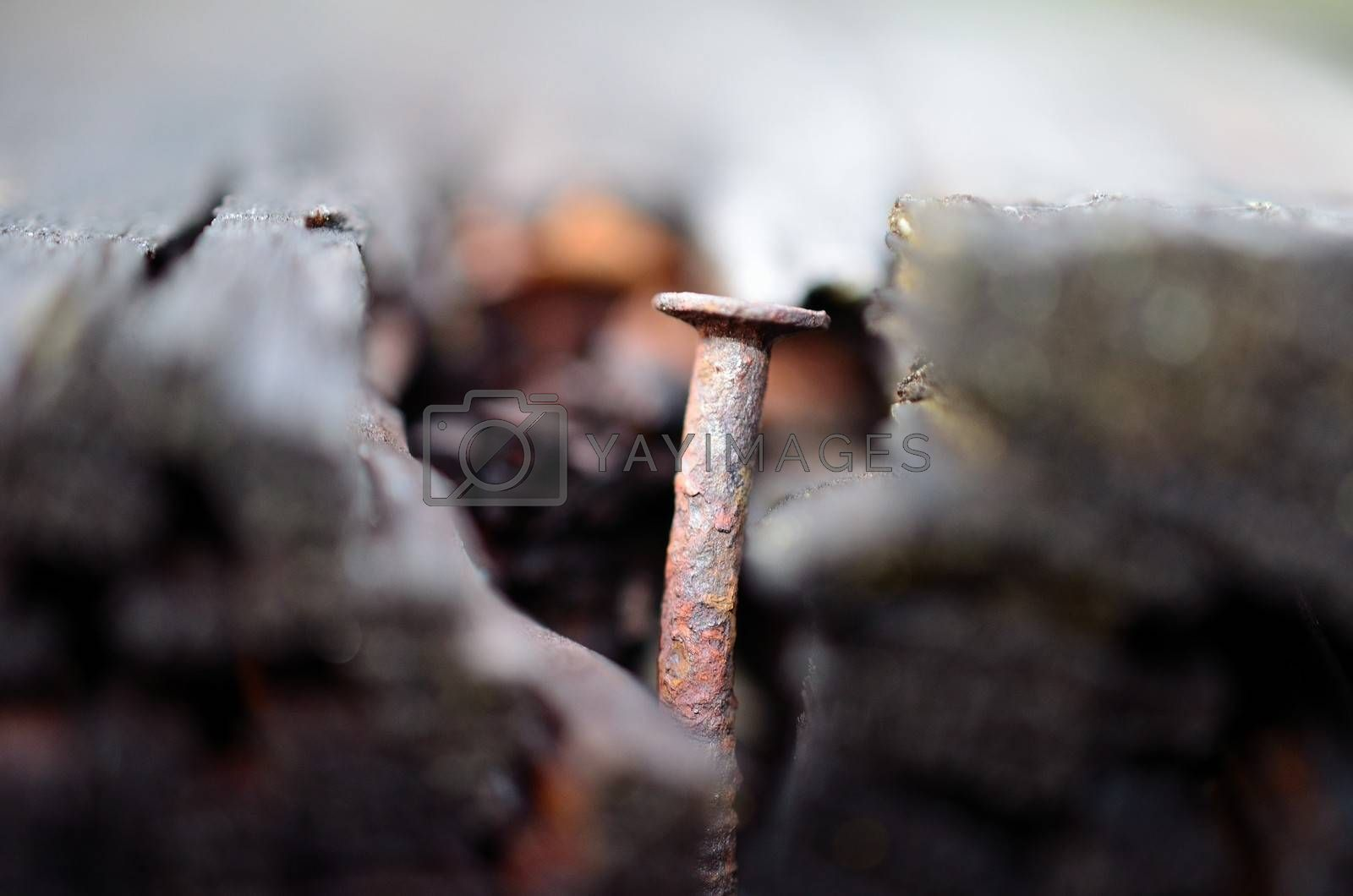 Royalty free image of Really old nail in a rotten log by Finephotoworks