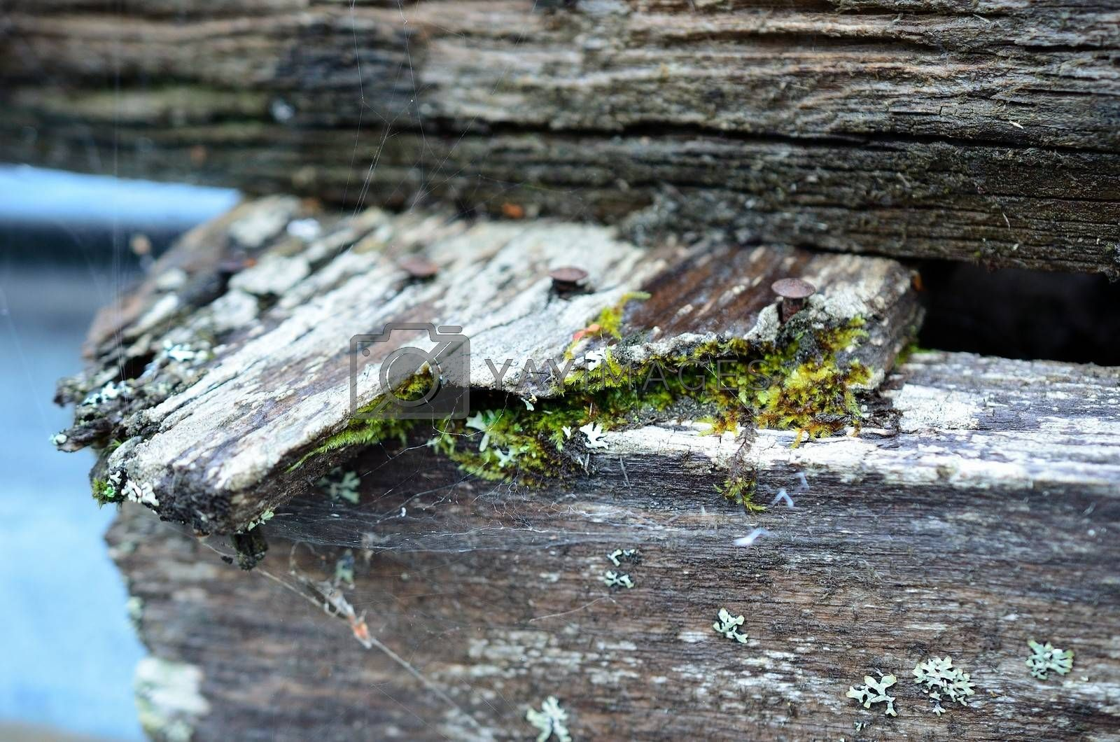 Royalty free image of Old rotten log with green moss on it by Finephotoworks