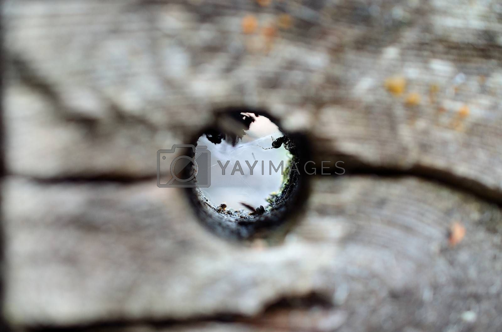 Royalty free image of Spider has made a cosy web inside a round hole in a big wood log by Finephotoworks