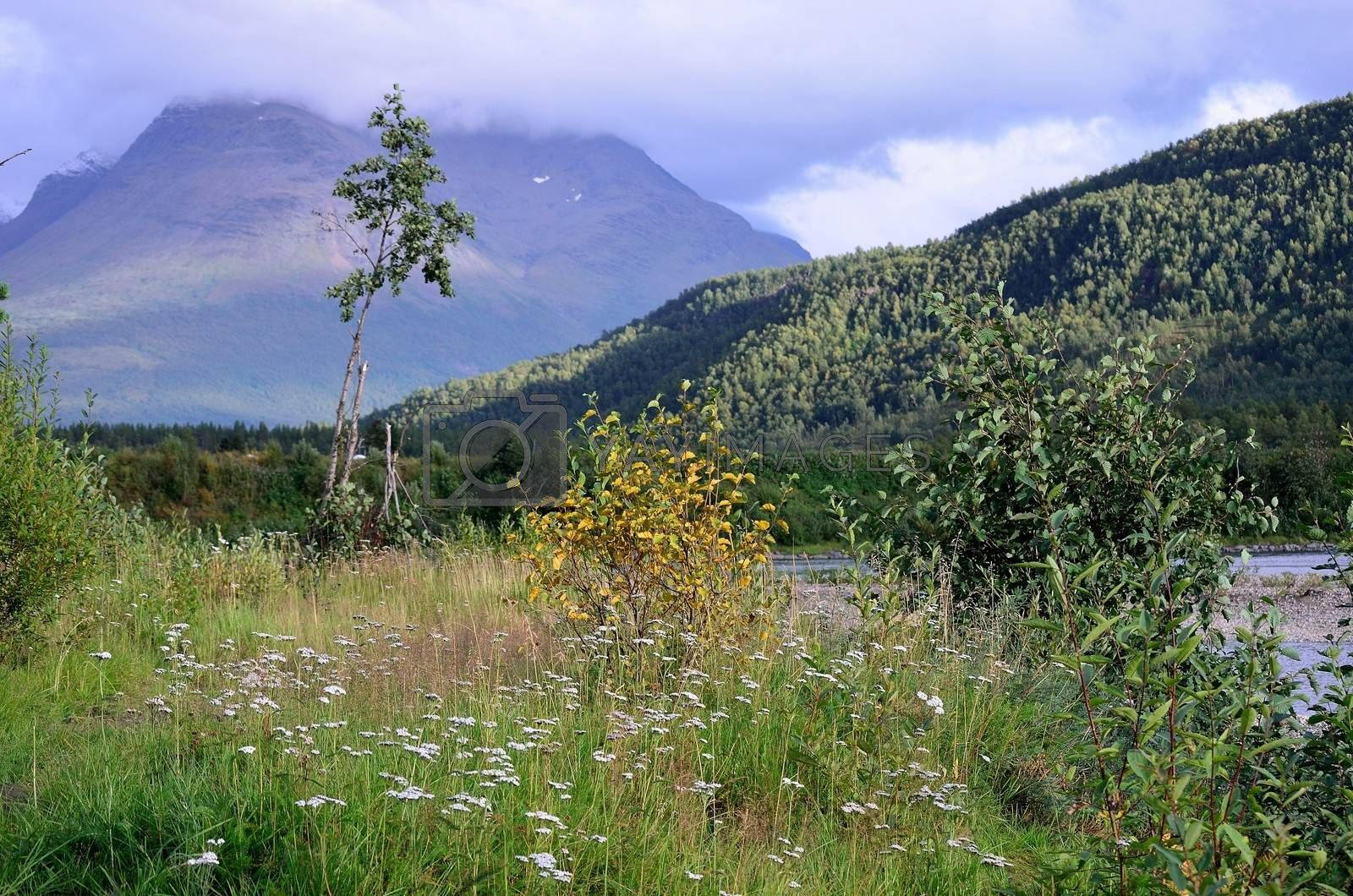 Royalty free image of Small bush turning yellow as the autumn is getting closer with a beautiful background in form of the mountain Alapen and the river of Målselv by Finephotoworks