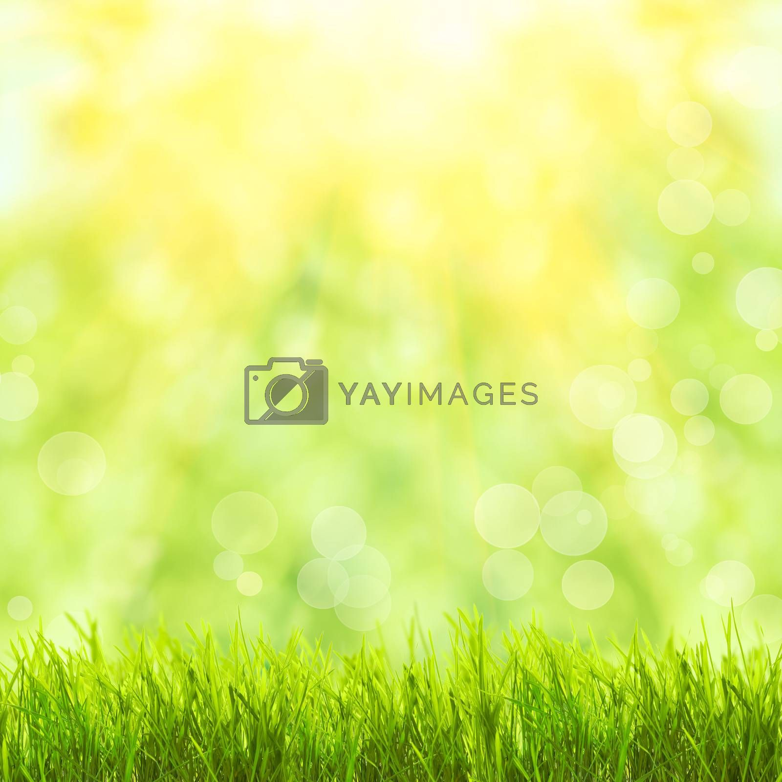 Green grass over spring bokeh and sunlight