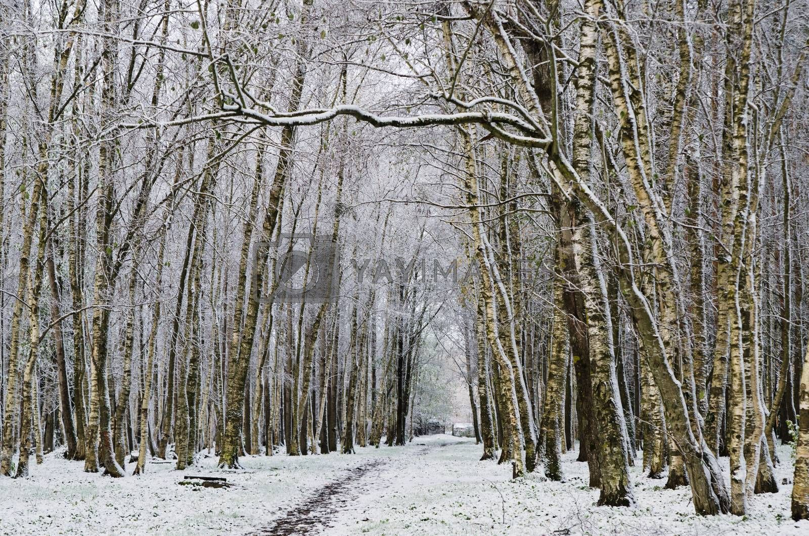 Alley in the Park later in the autumn. First snow