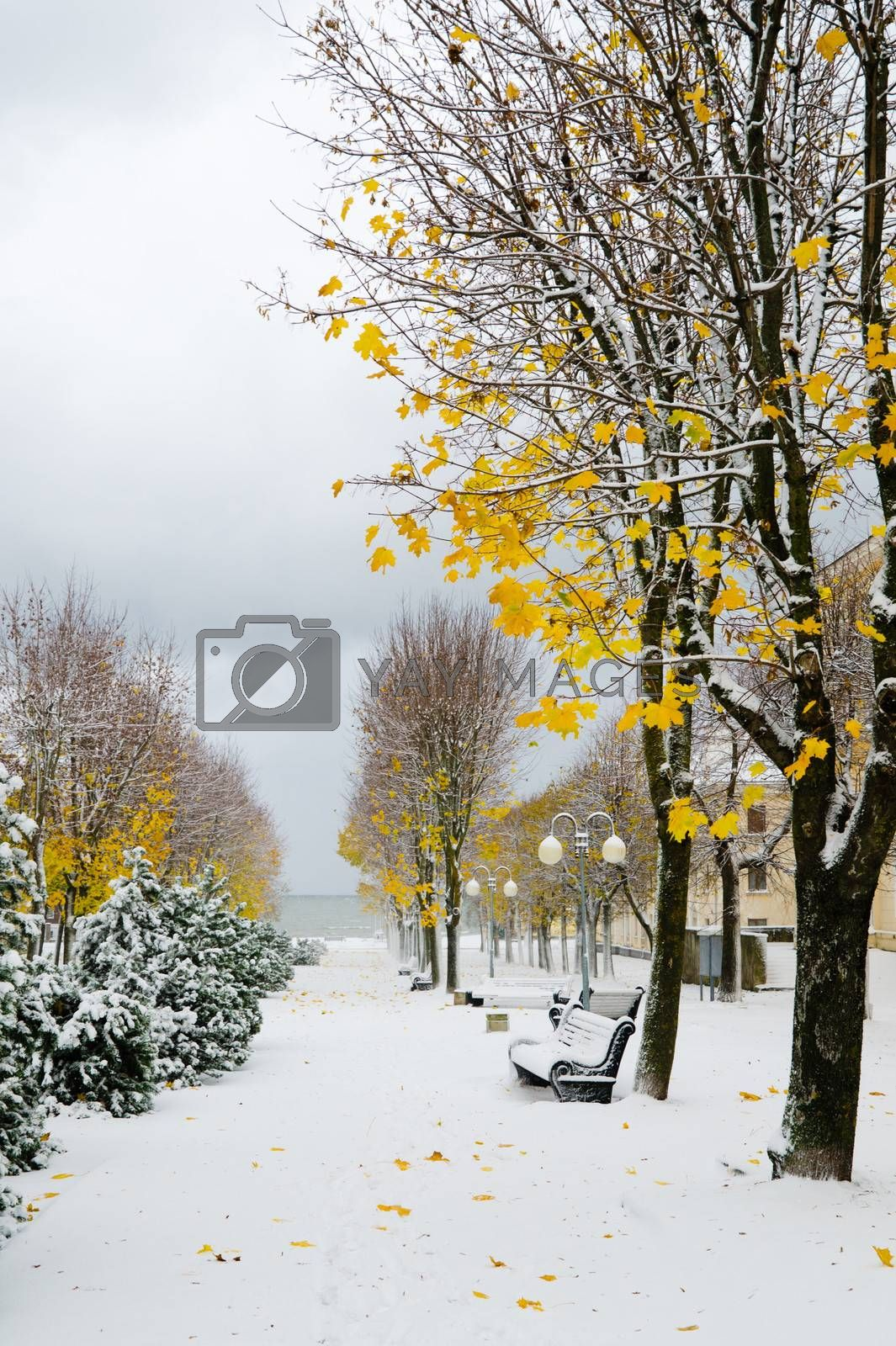 Alley in the Park later in the autumn. Snow storm