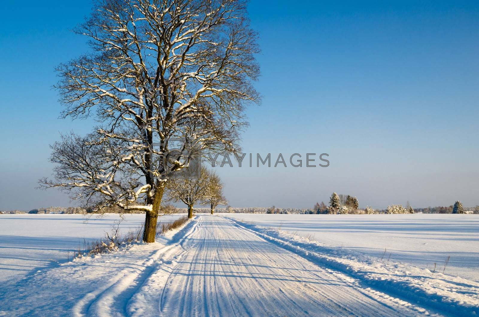 Winter landscape with road to a countryside by breeze09