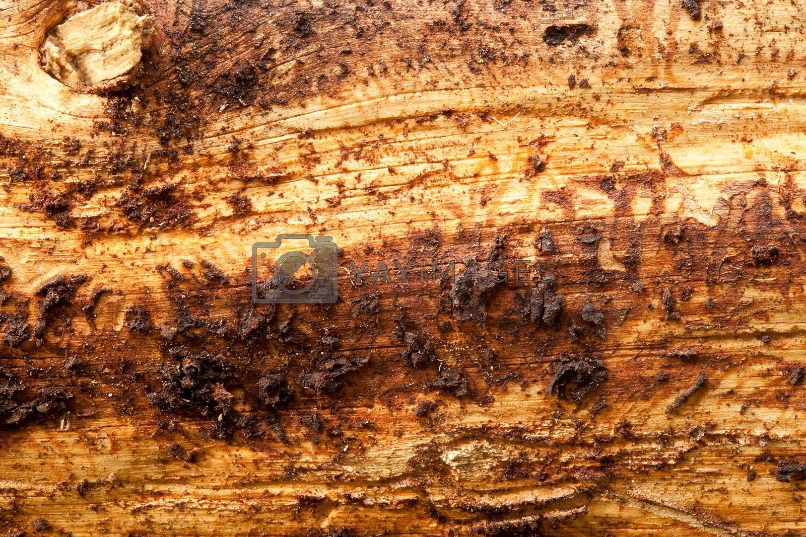Close up of a rough tree trunk
