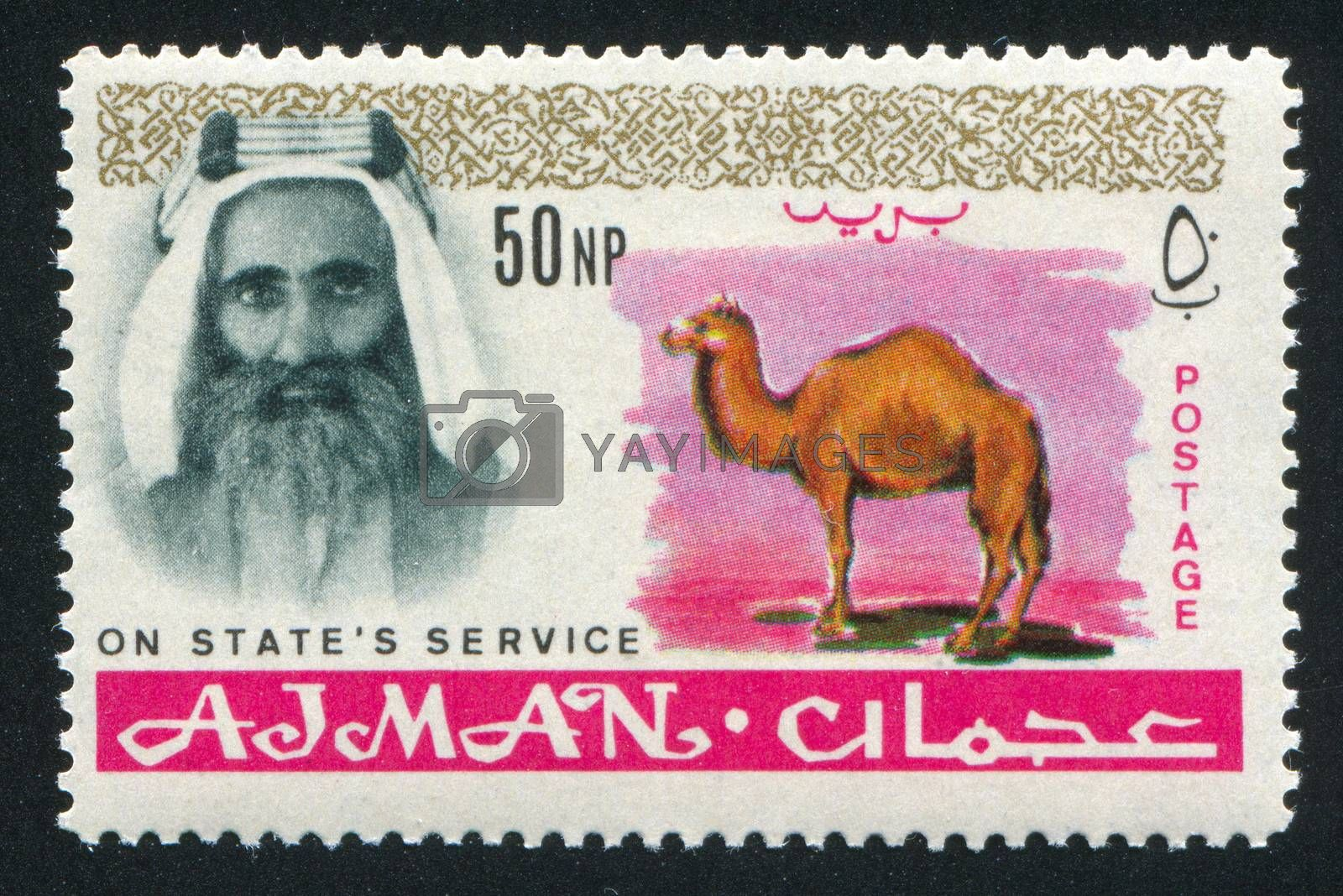AJMAN - CIRCA 1964: stamp printed by Ajman, shows Sheik Rashid bin Humaid al Naimi and camel, circa 1964