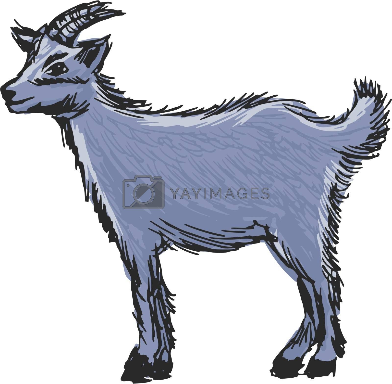 Royalty free image of little goat by Perysty