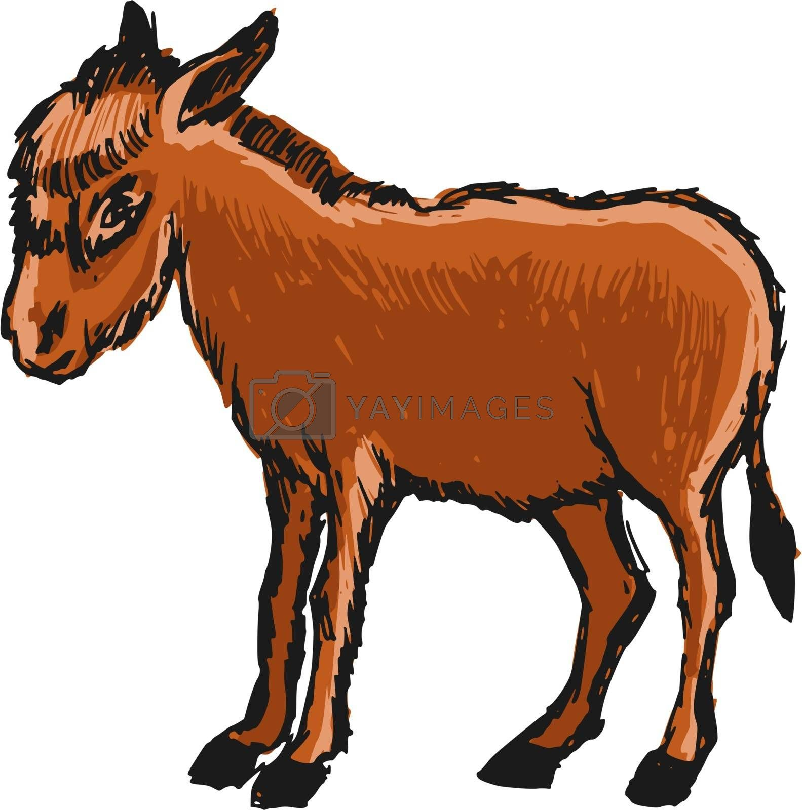 Royalty free image of donkey by Perysty