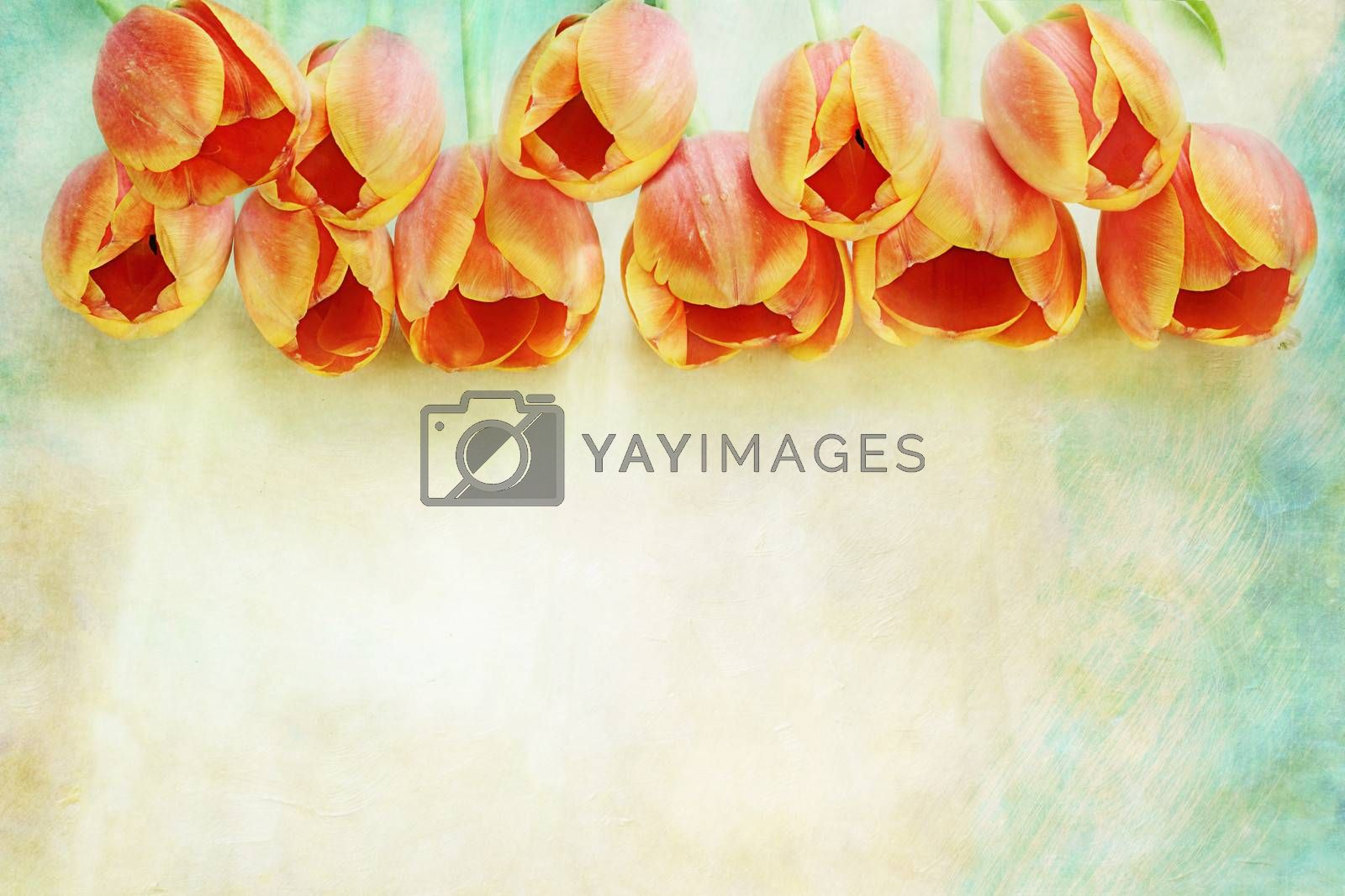 Row of beautiful orange tulips over a textured background with copy space.