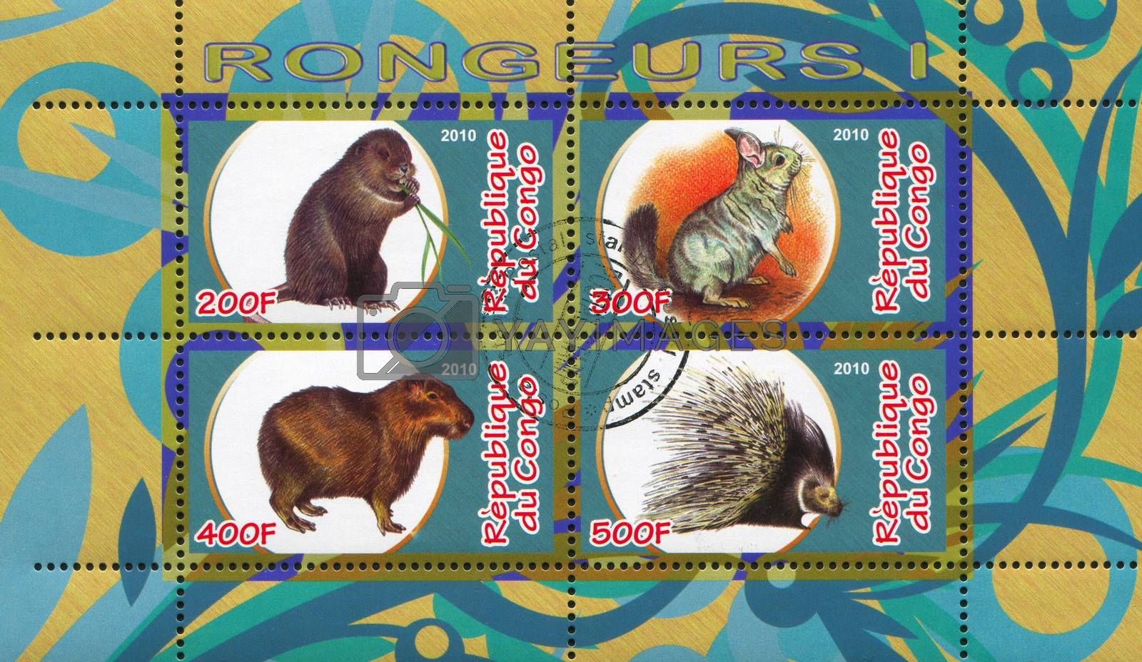 CONGO - CIRCA 2010: stamp printed by Congo, shows animalss, circa 2010
