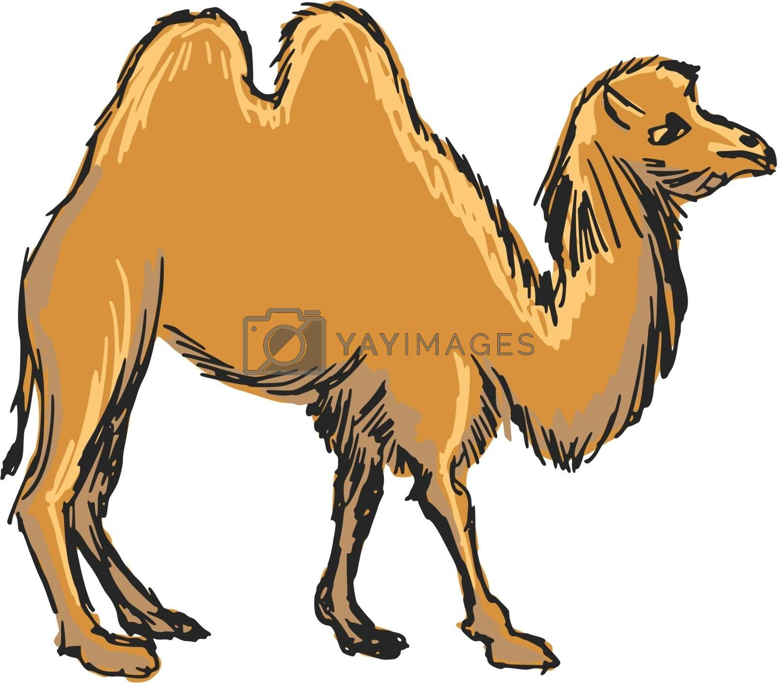 Royalty free image of camel by Perysty