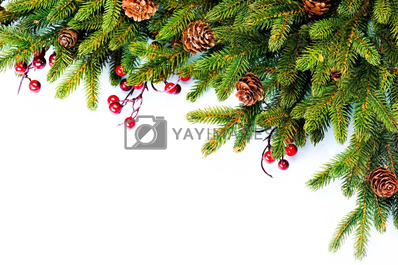 Christmas. Evergreen Fir tree Border Design