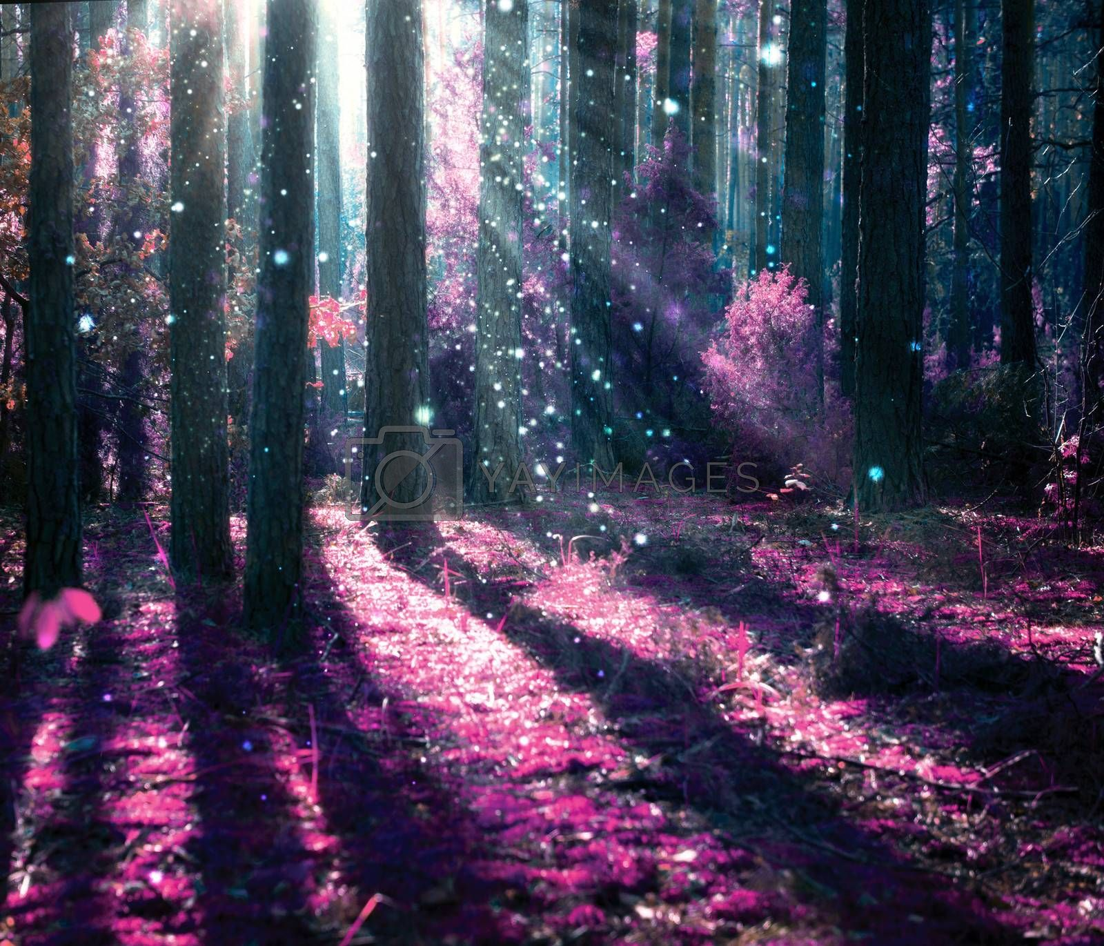 Fantasy Landscape. Mysterious Old Forest