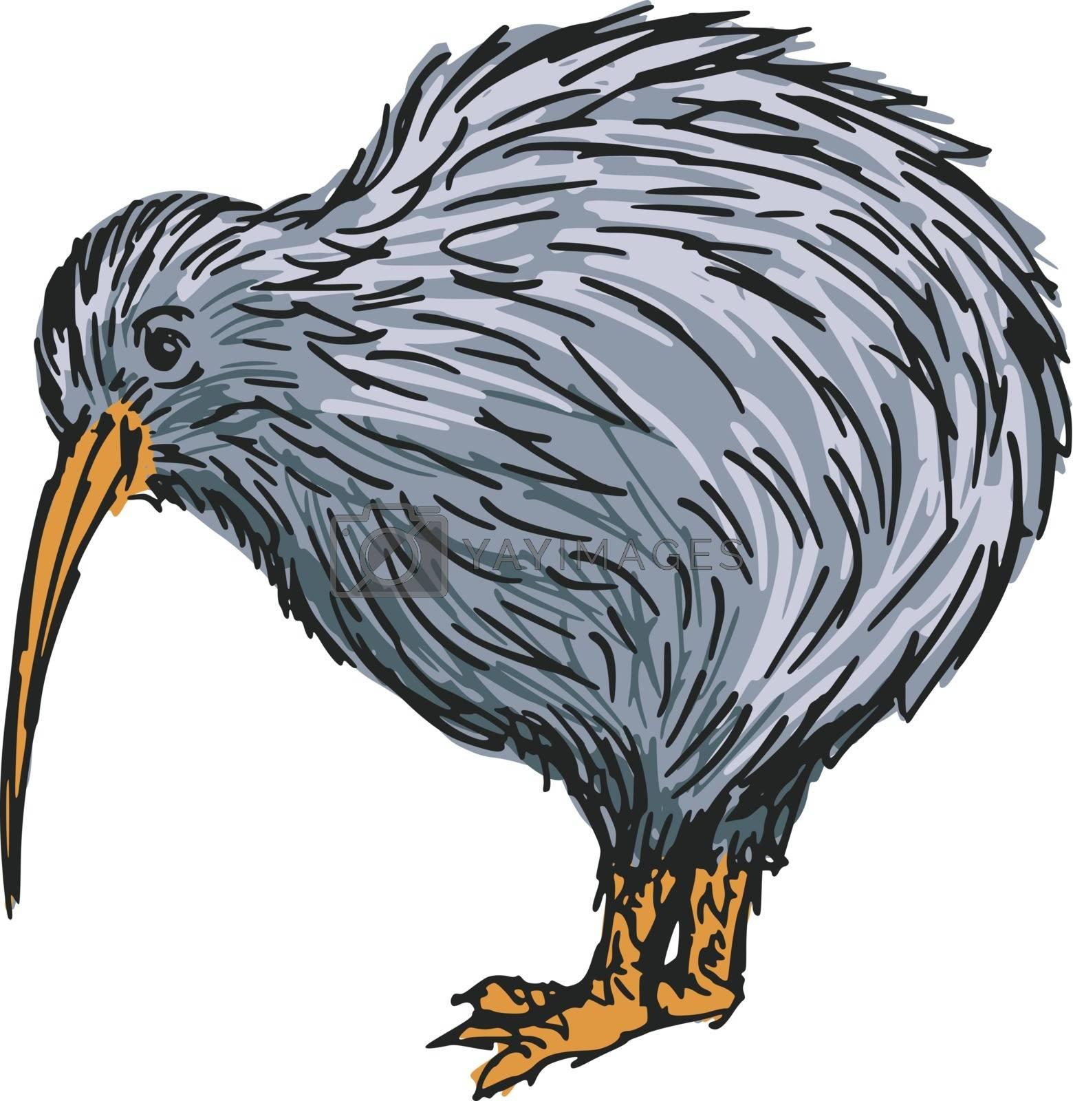 Royalty free image of kiwi bird by Perysty