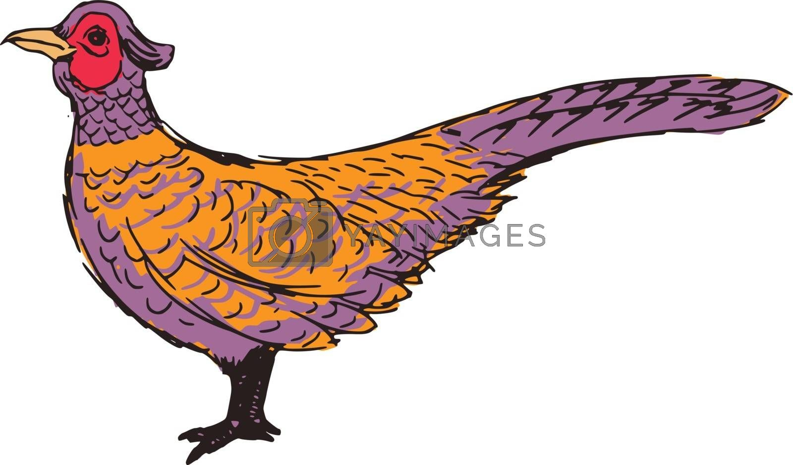 Royalty free image of pheasant by Perysty