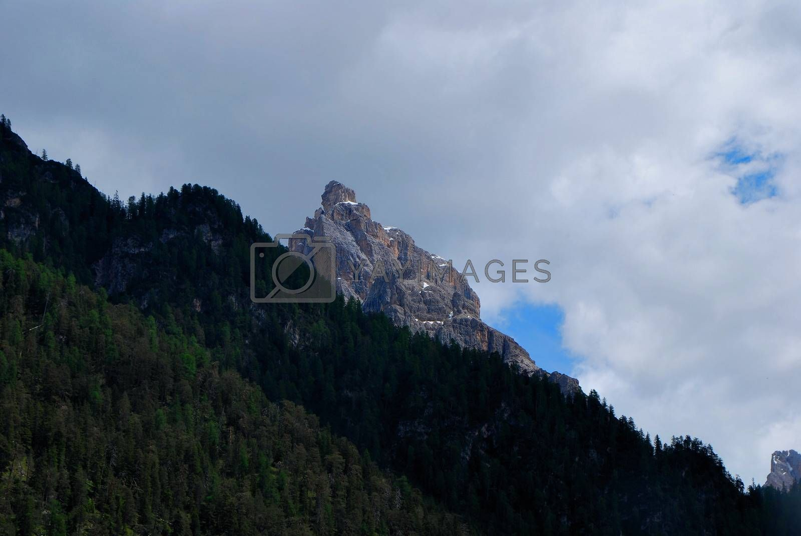 high mountain and dense green forest