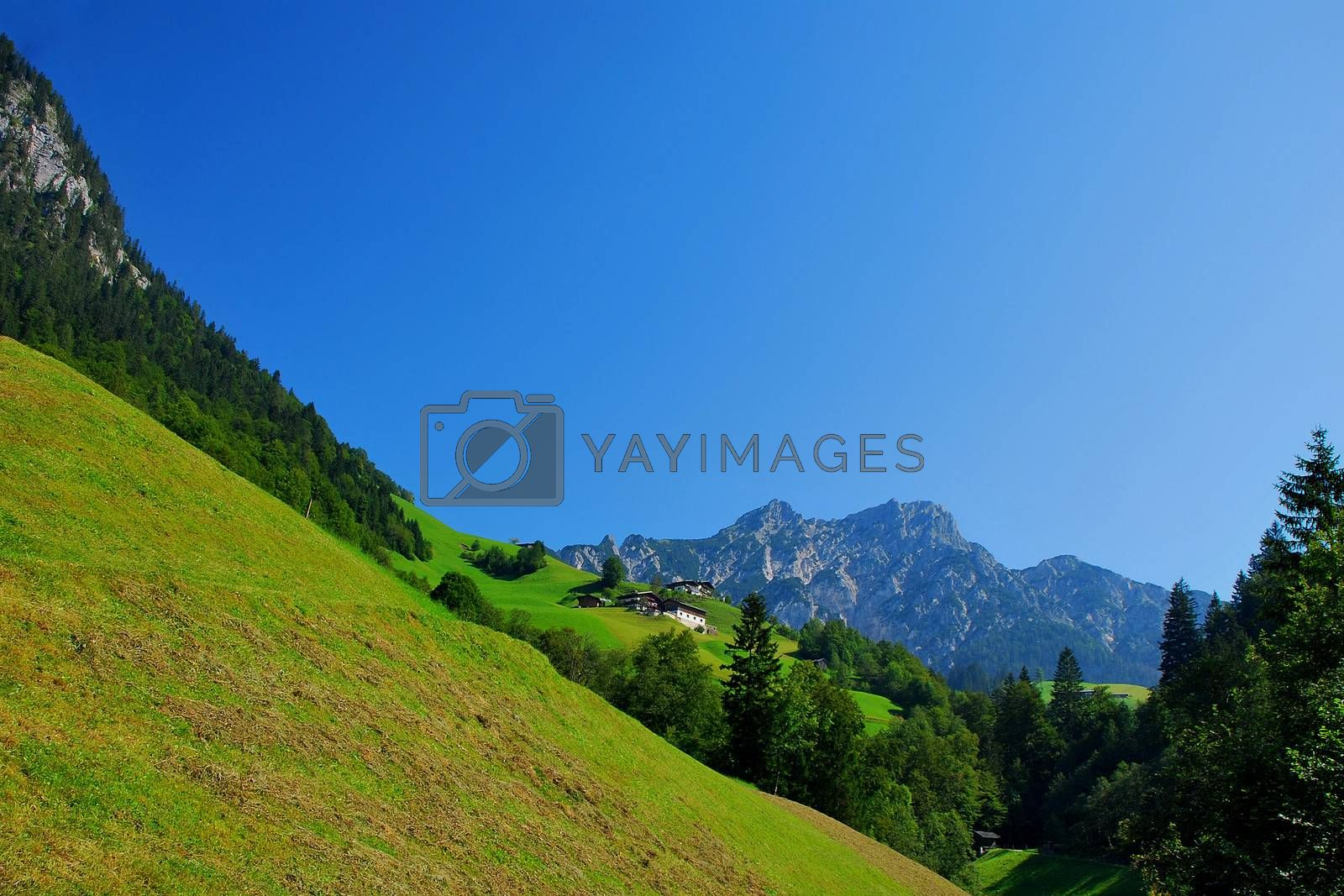 green alpine meadows and trees in a landscape with mountains