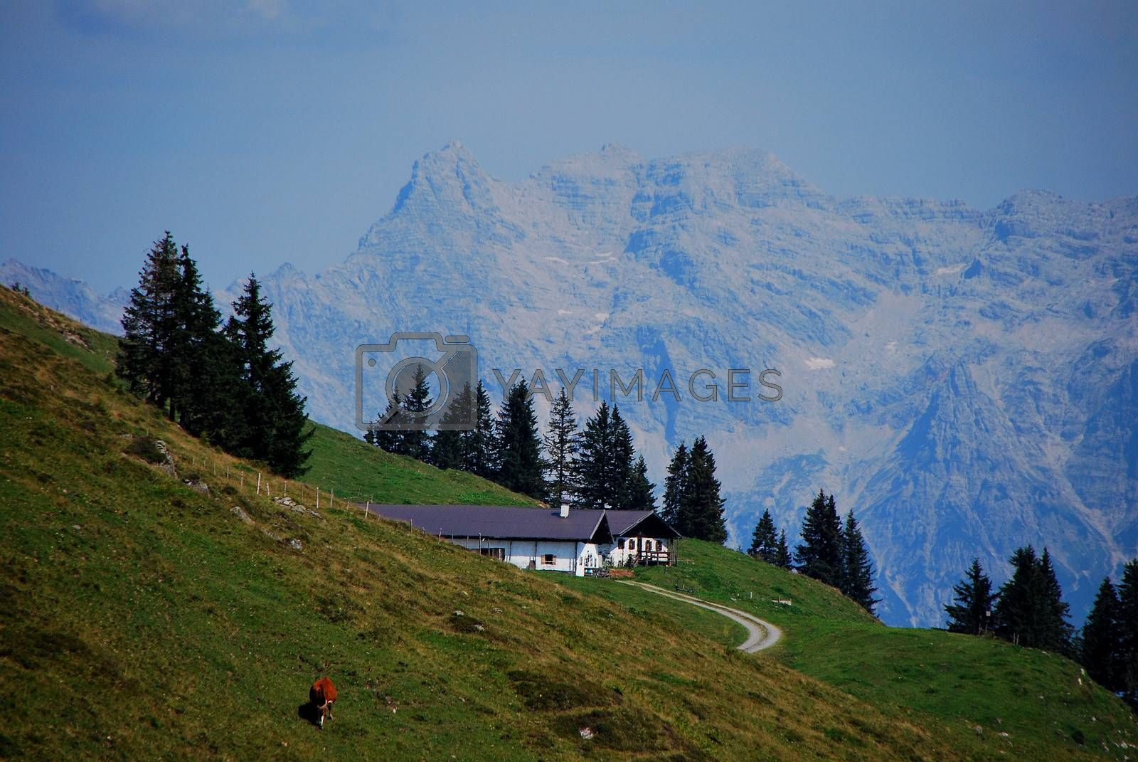 house and green alpine pasture in the high mountains