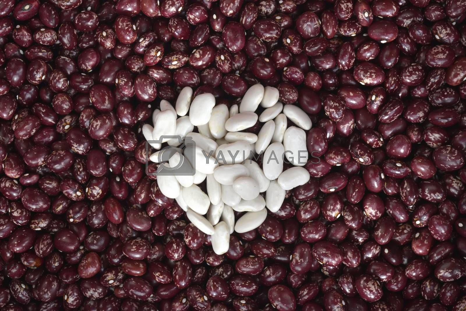 red bean background with heart made with white beans