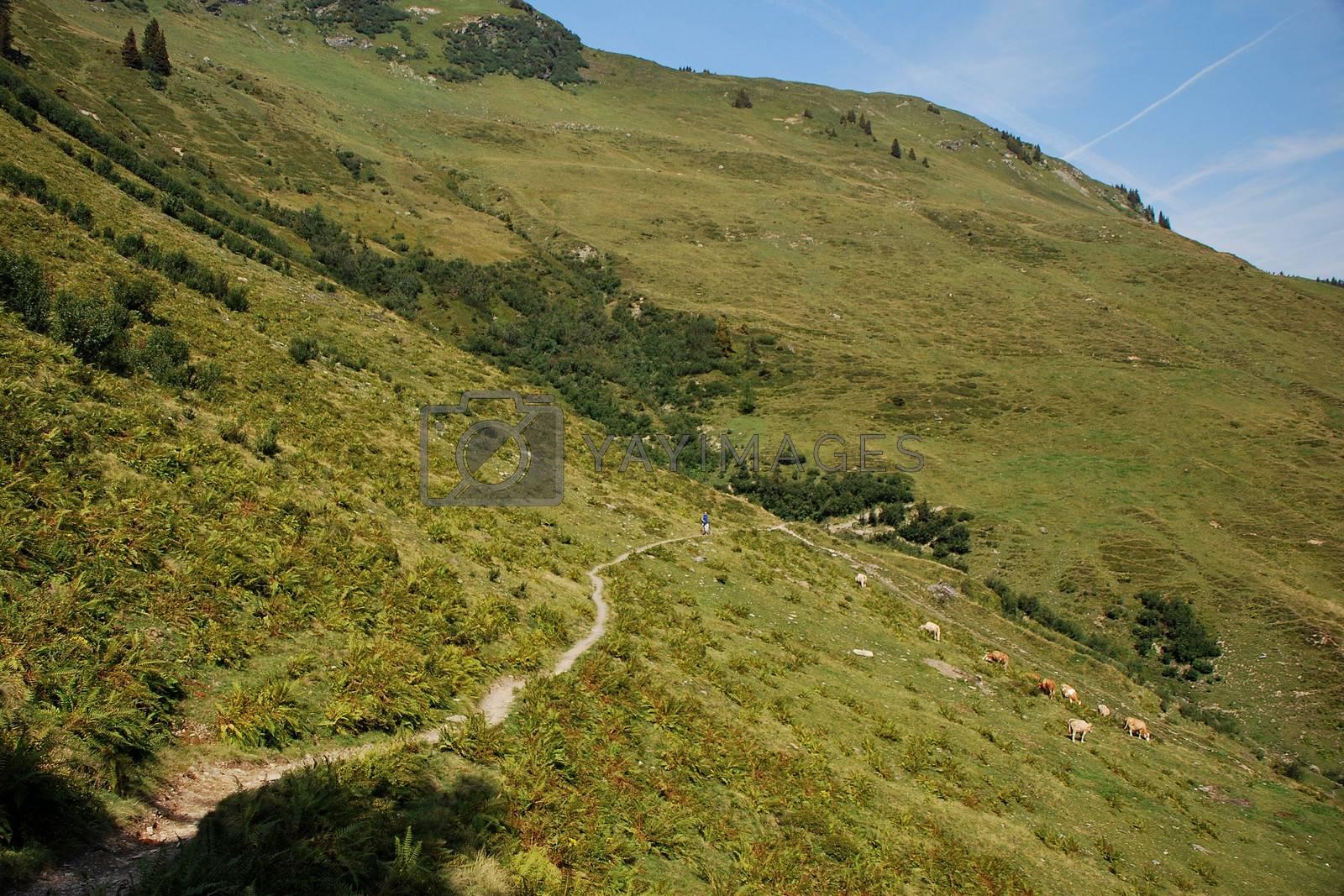 a narrow path on mountain with mountain biker