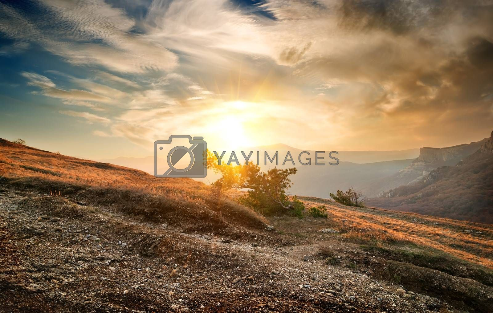 Lonely shrub on a mountain and cloudy sky