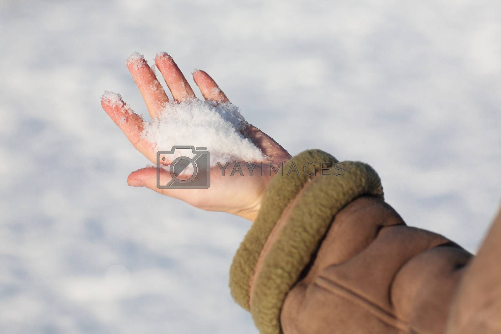 snow in hand