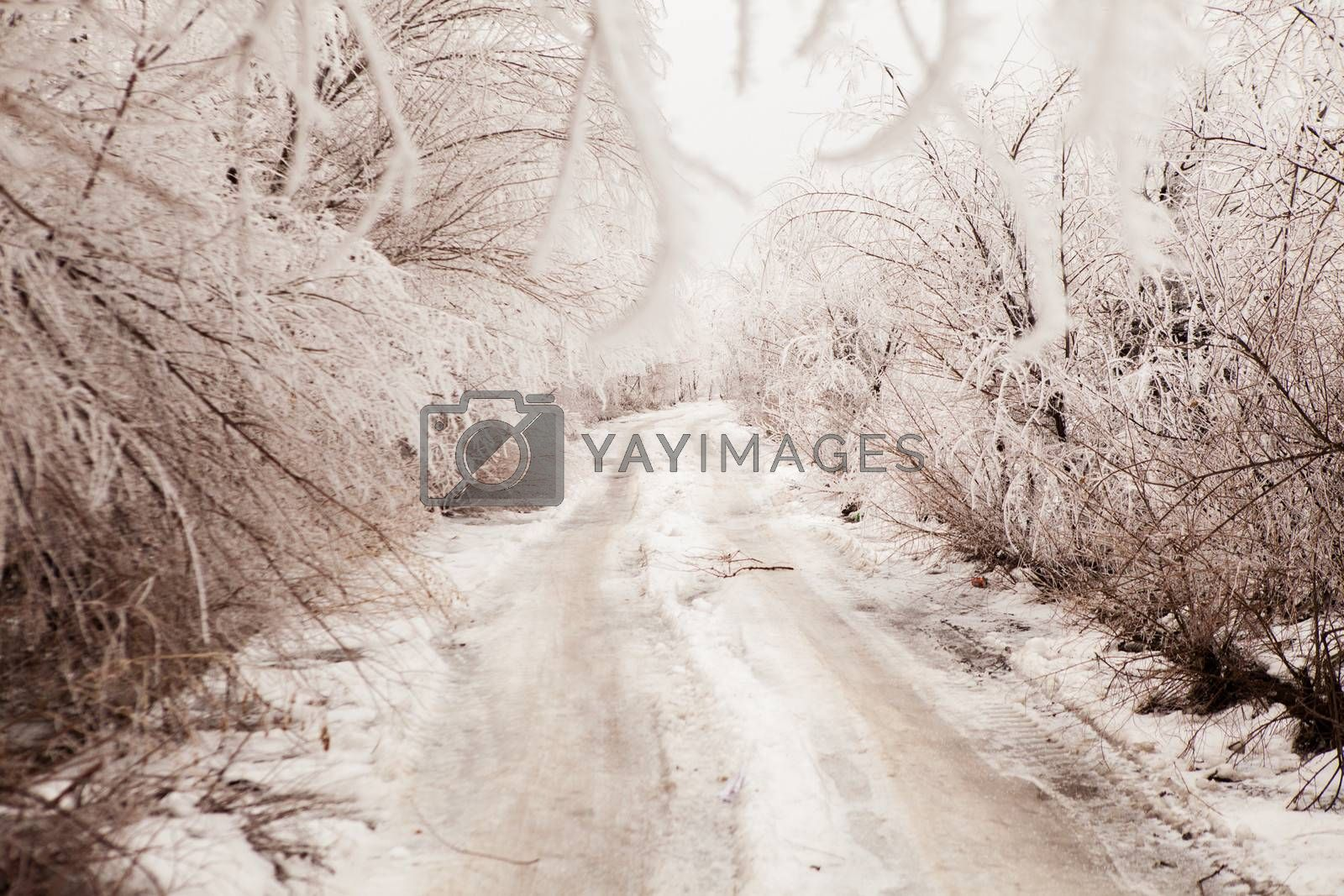 winter road toned in sepia