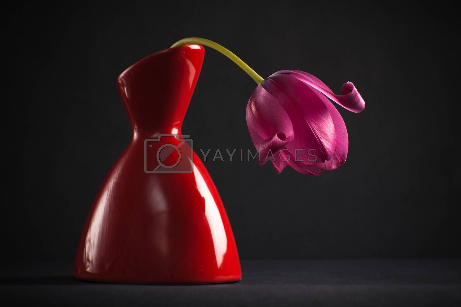 pink tulips in a vase on a black background