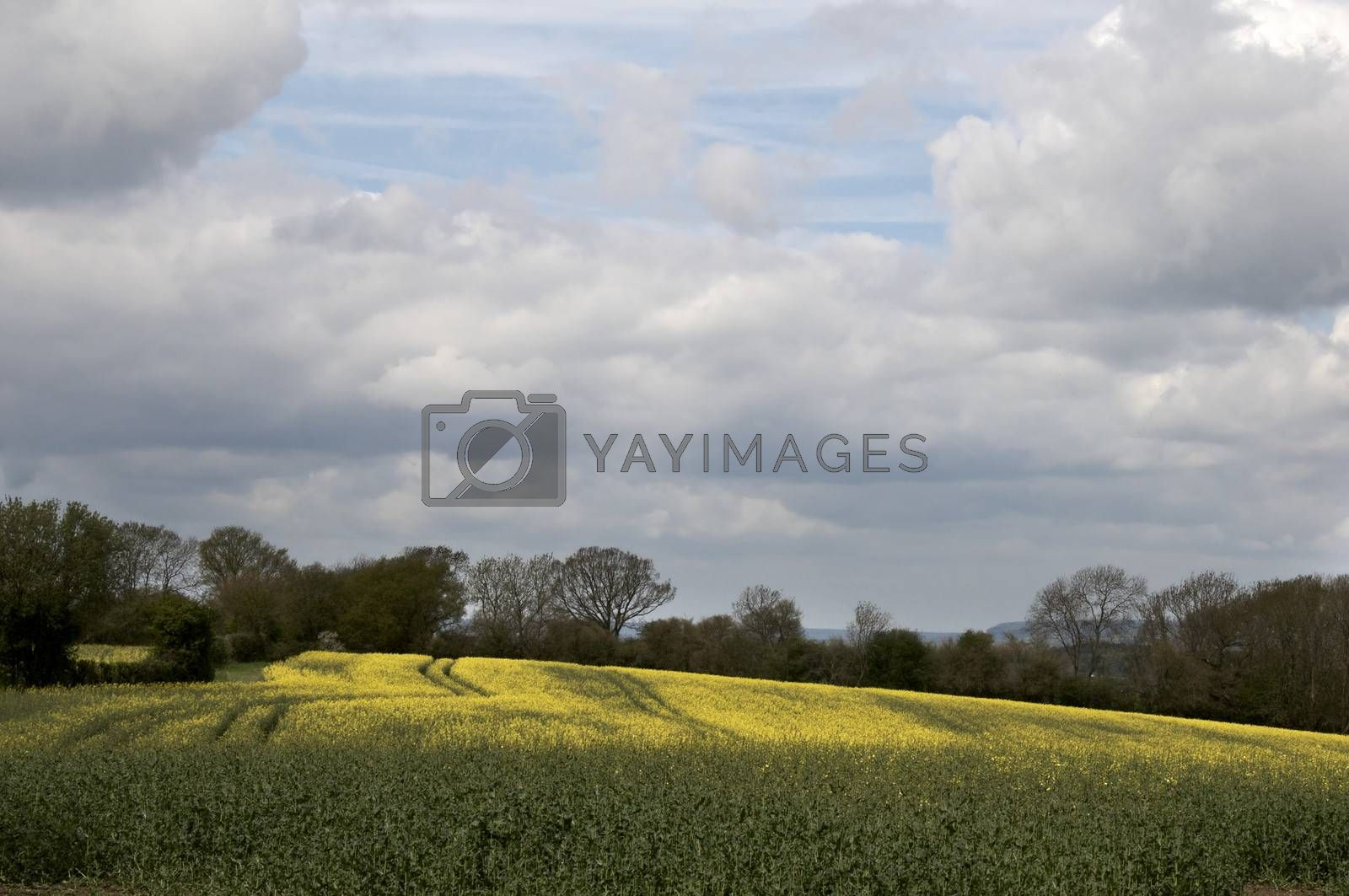 farm fields on a summers day with cloudy sky