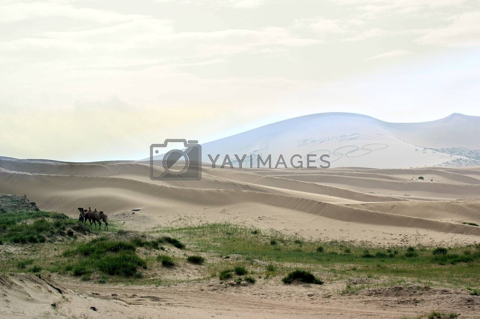 Sand Hill beside the Qinghai Lake by xfdly5