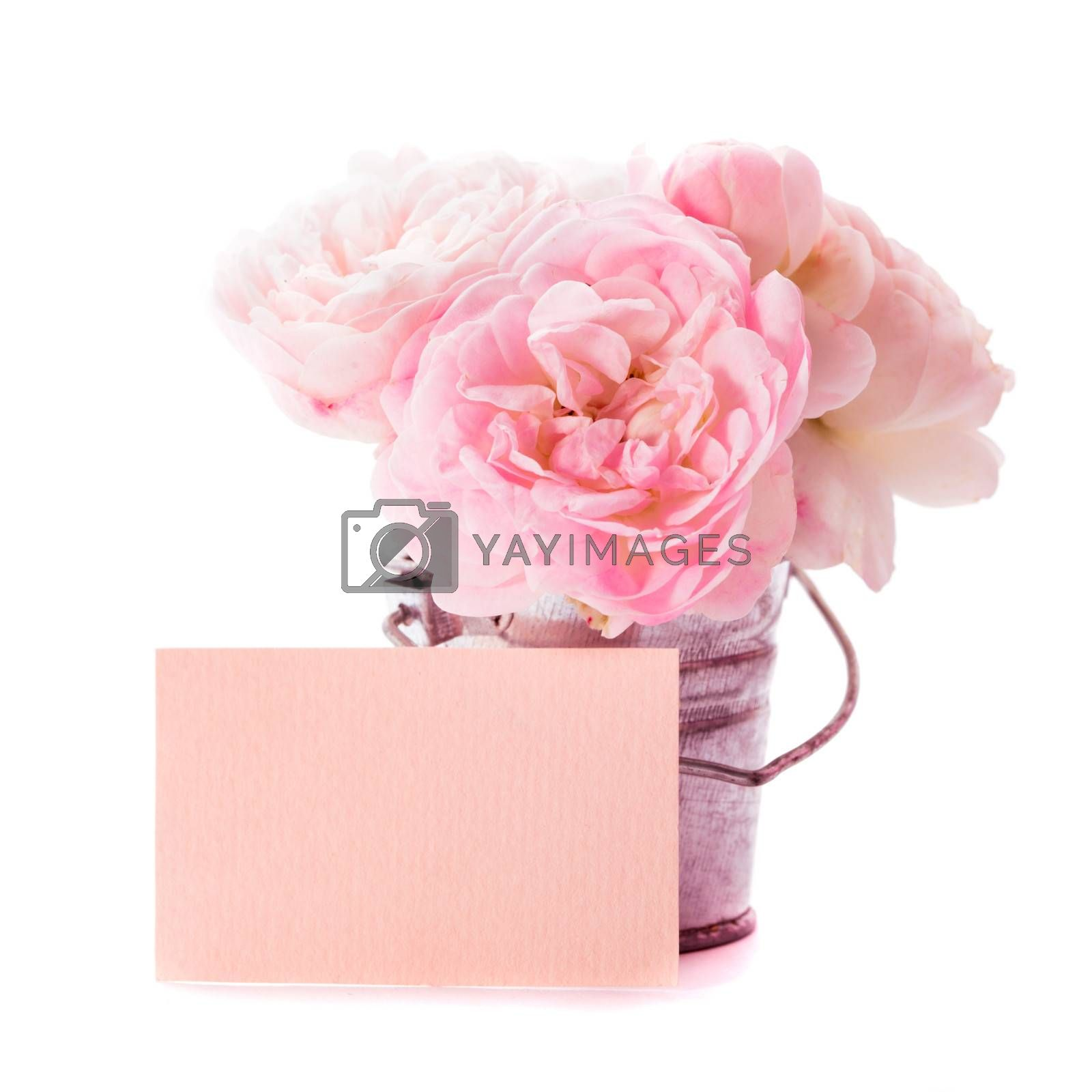 Cute greetings: pink roses bunch in little bucket and card, on white