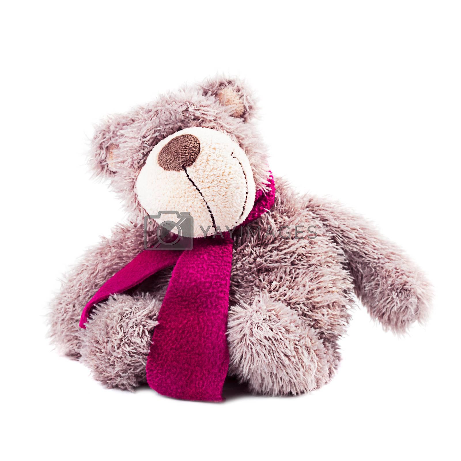 Tebby bear - plush toy, isolated on white