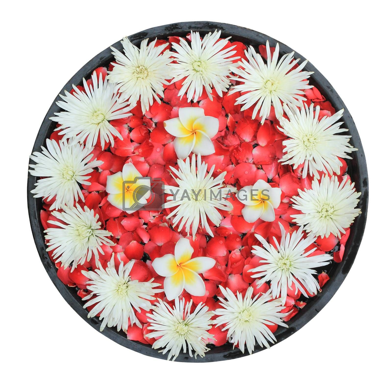 Flowers floating in the ancient bowl isolated