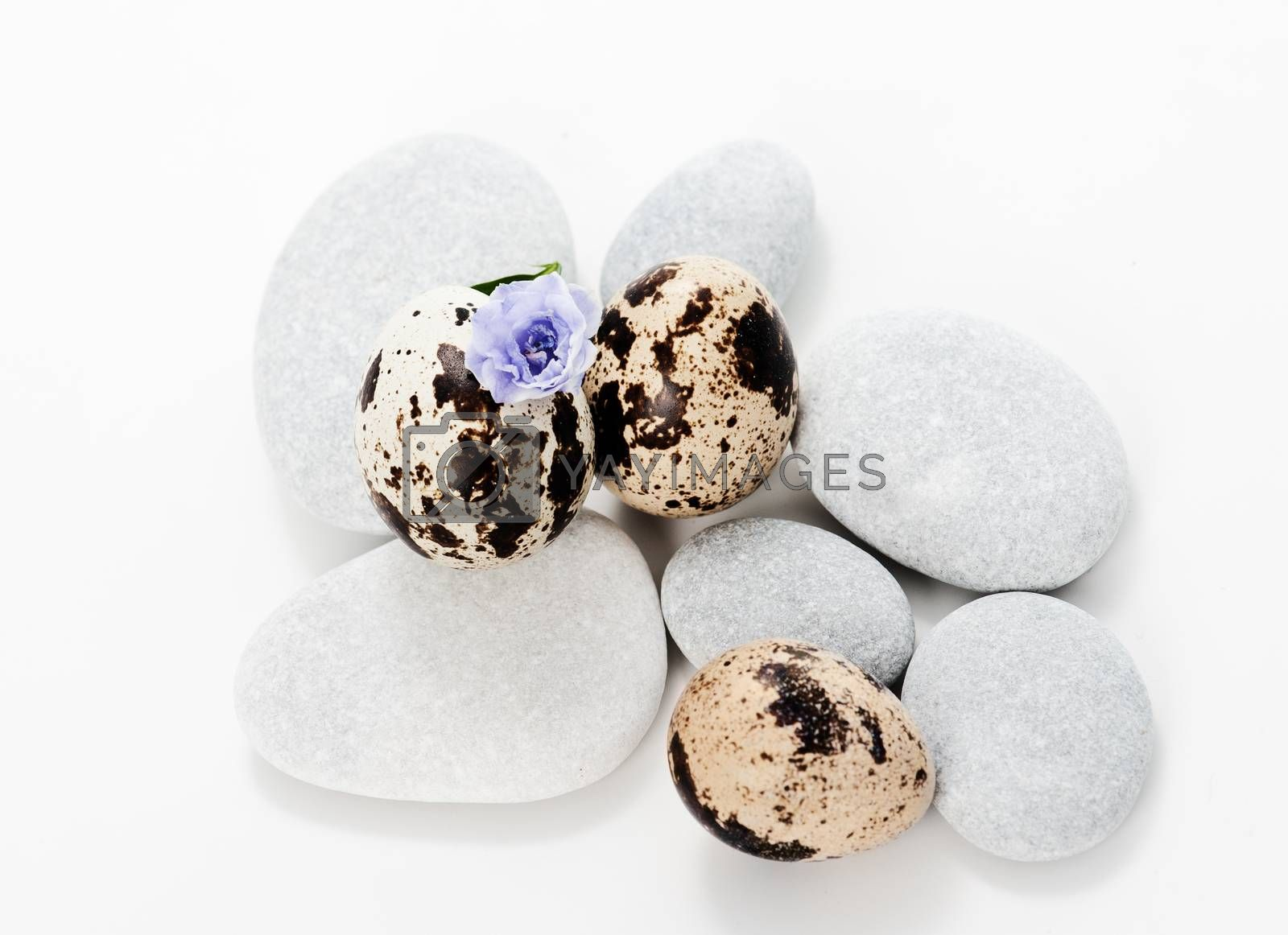 Set with sea stones and quail eggs