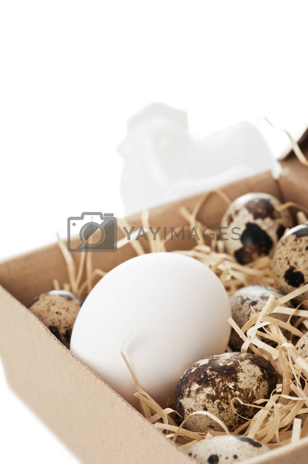 Chicken and quail eggs in box