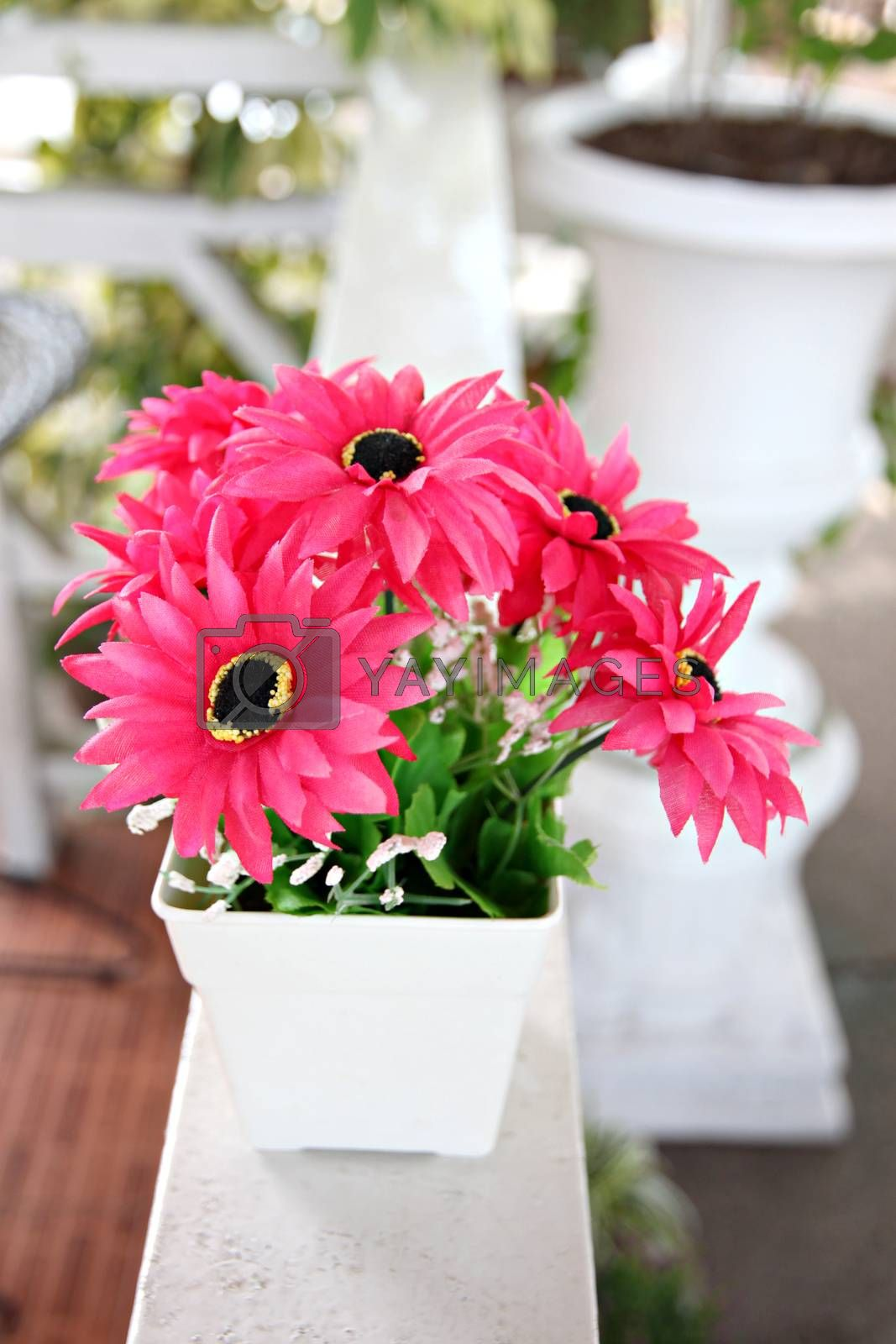 Pink flowers in white potted and Placed on white wooden balcony.