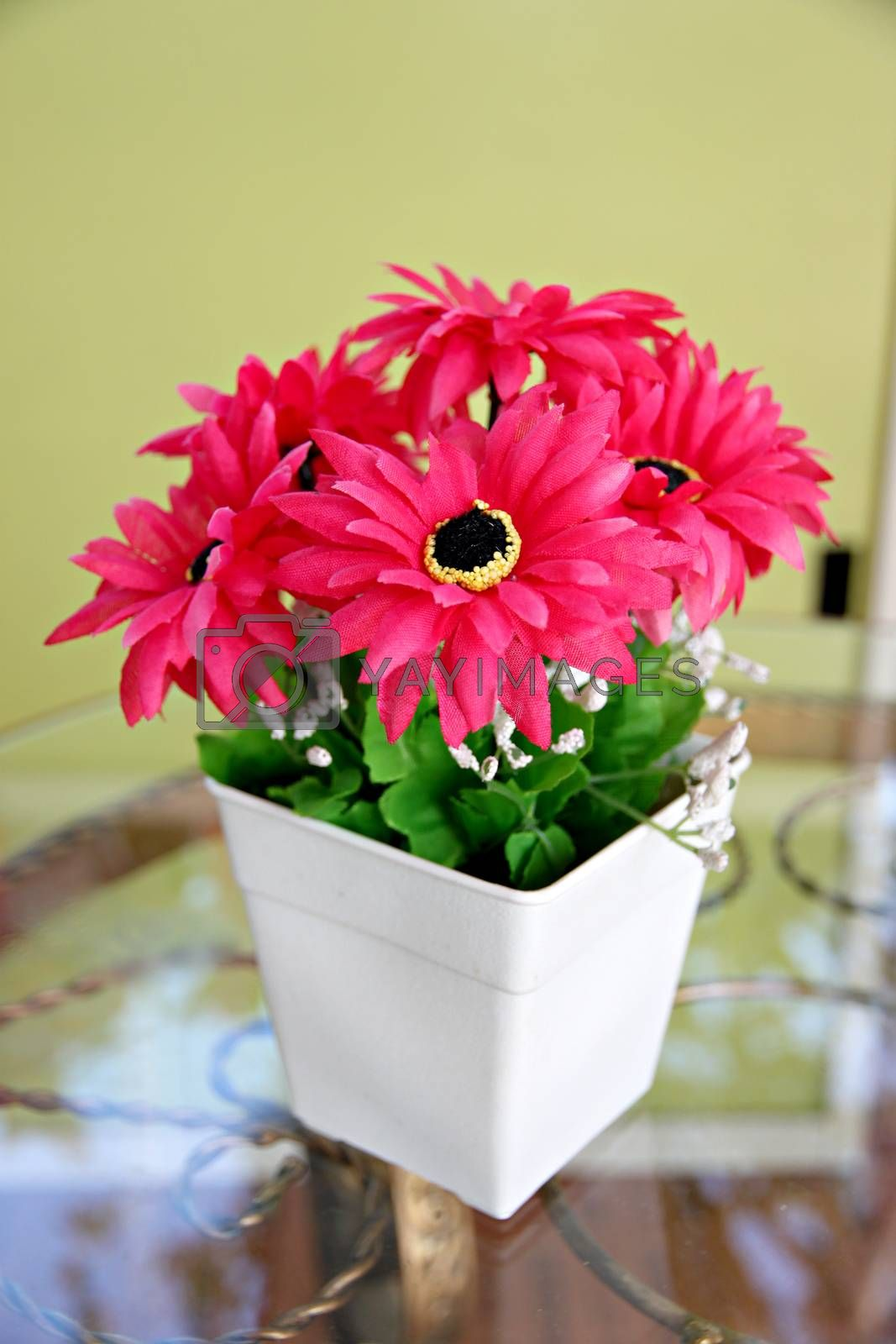 Pink flowers in a white potted and Placed on glass table with soft yellow background.
