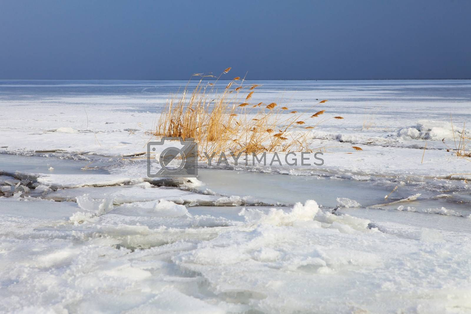 cane on the frozen river
