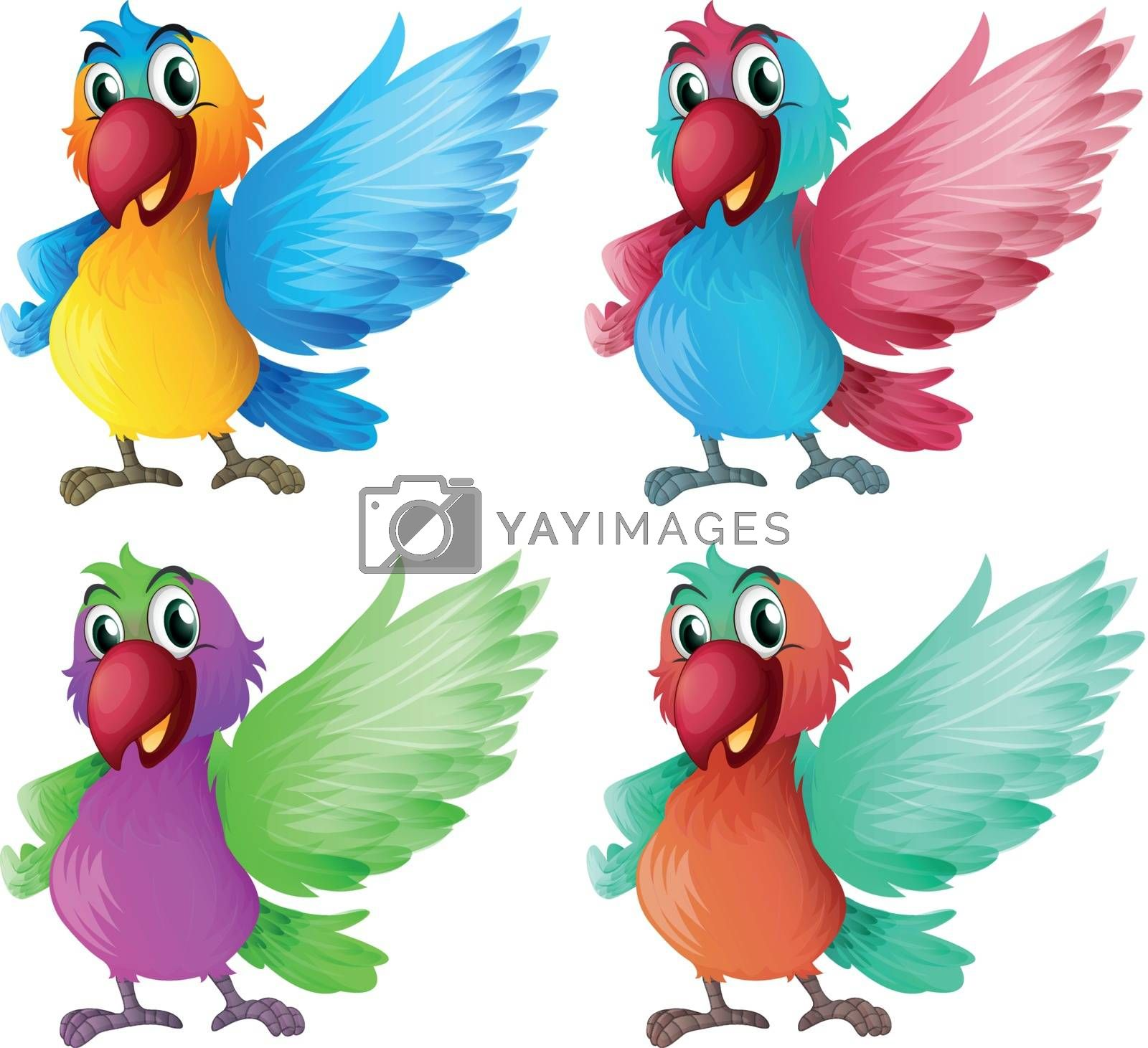 Illustration of the four adorable parrots on a white background