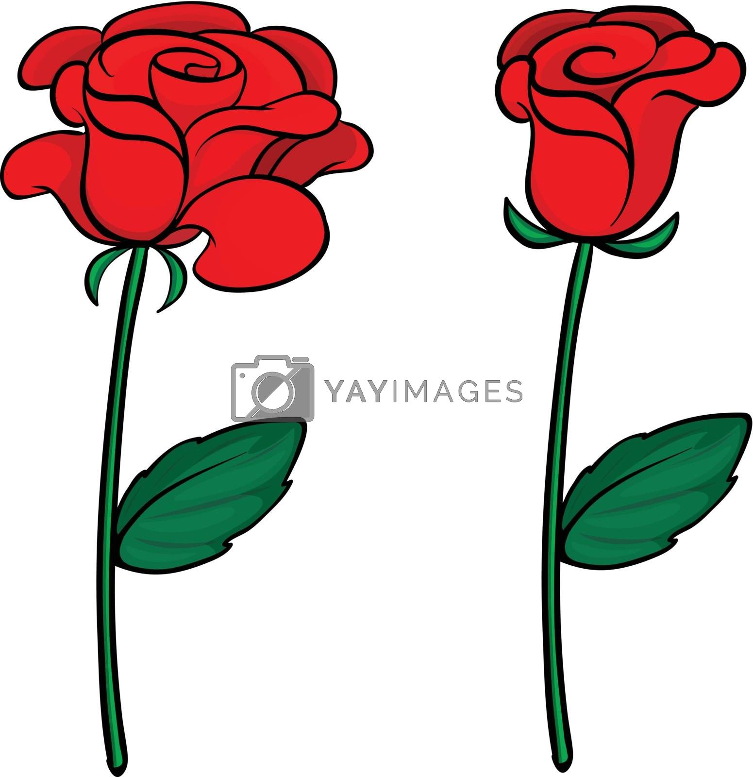 Illustration of two red roses on a white background