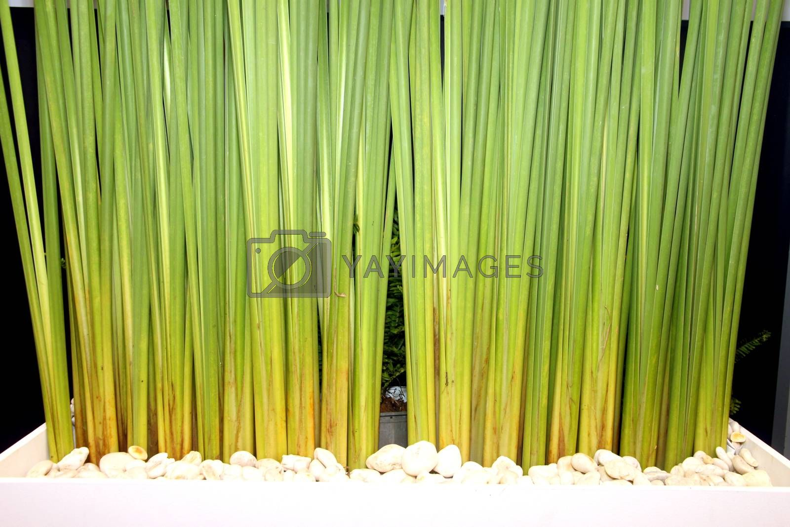 The Picture Stems of green plants.