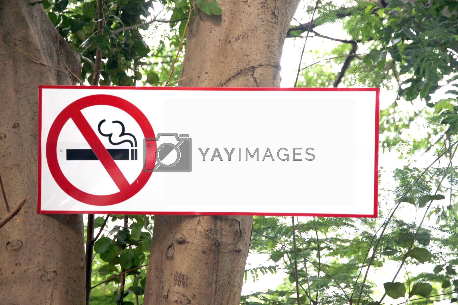 The Post Stop Labels smoking on tree background.