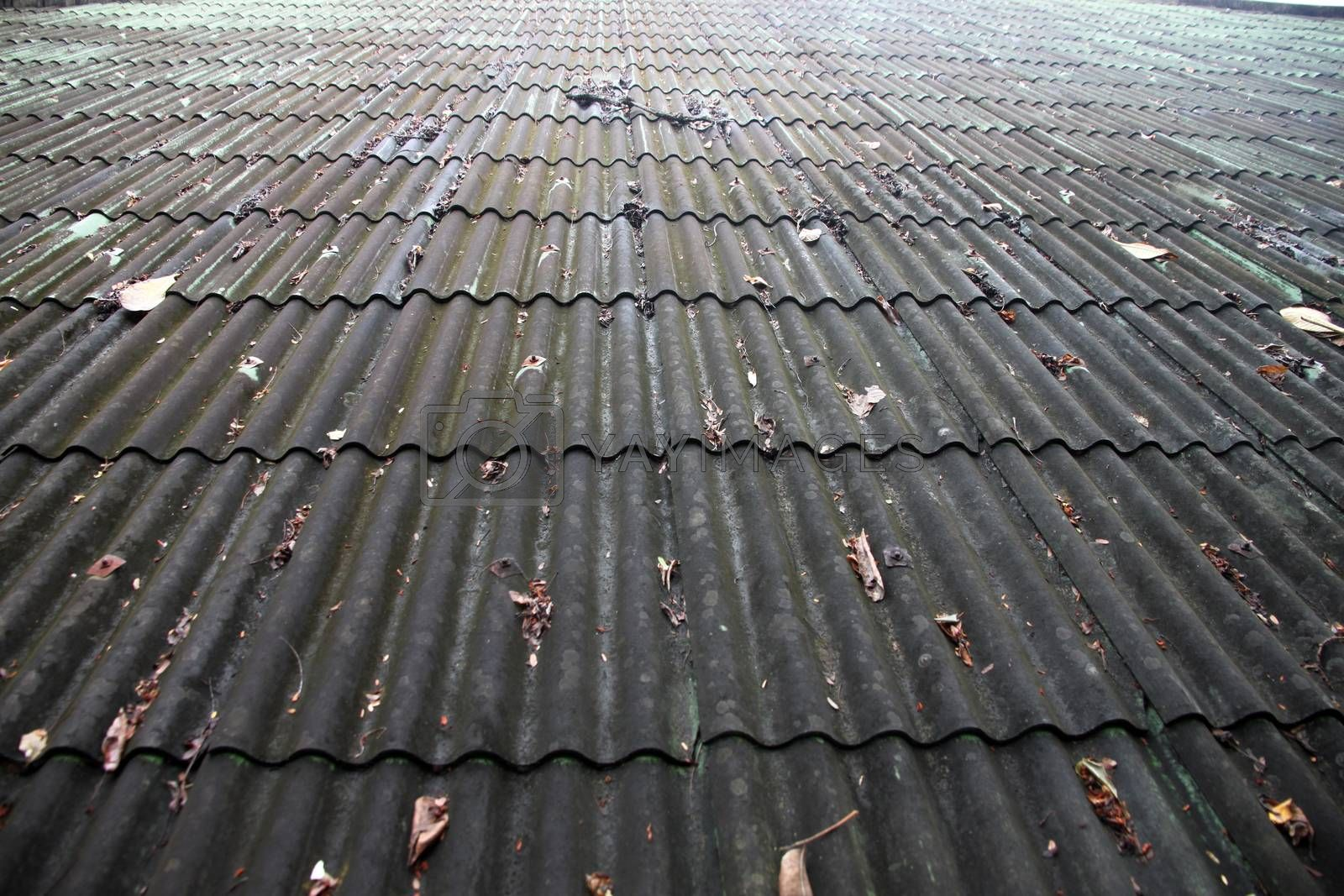 Tile roof of the house is very old and And also algae on roof.