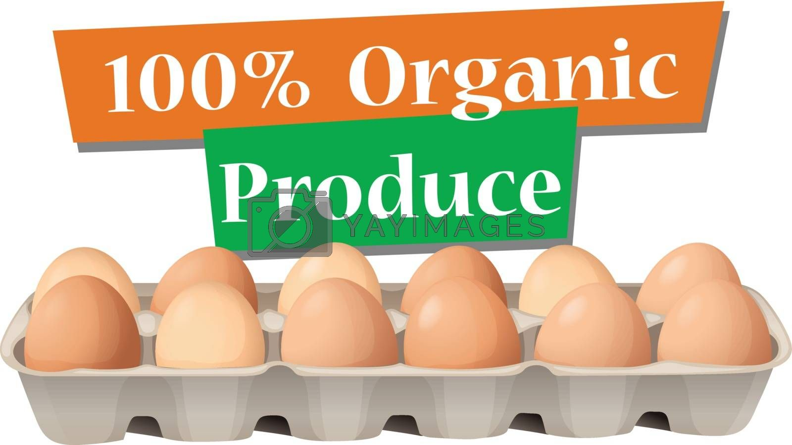 Illustration of an organic produced eggs on a white background
