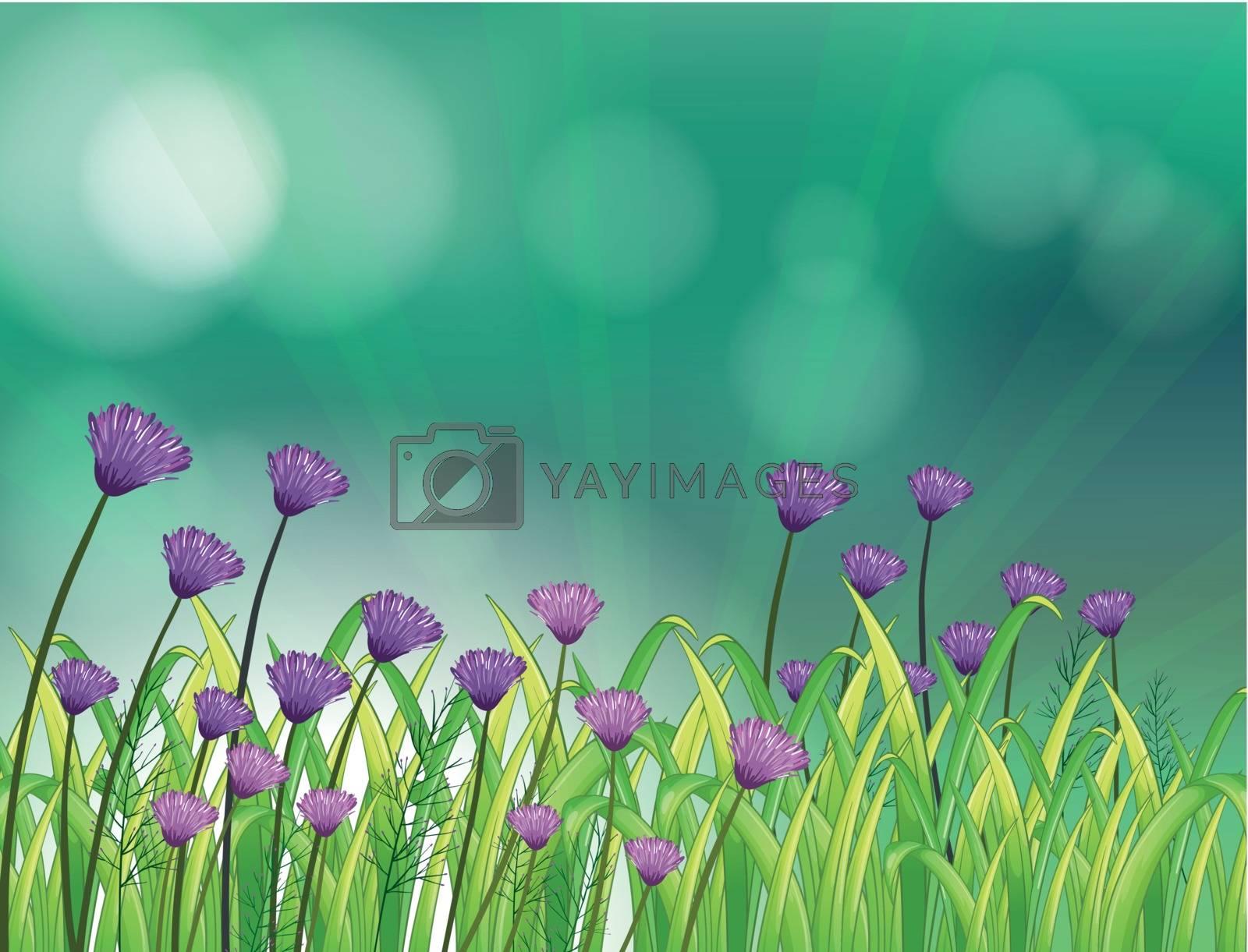 lllustration of a garden with violet flowers