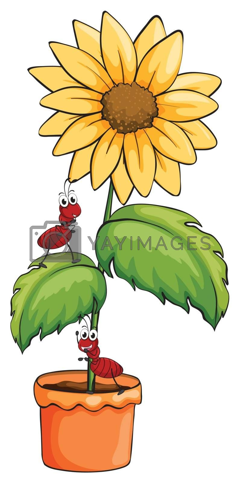 Illustration of a sunflower with two ants on a white background