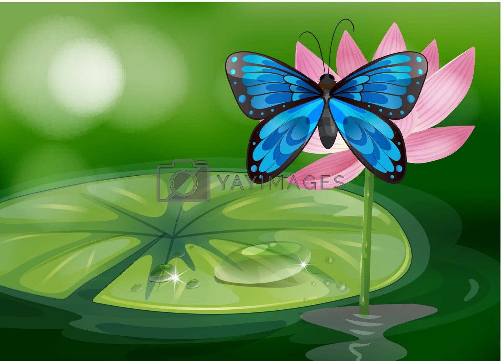 Royalty free image of A blue butterfly and the pink flower at the pond by iimages
