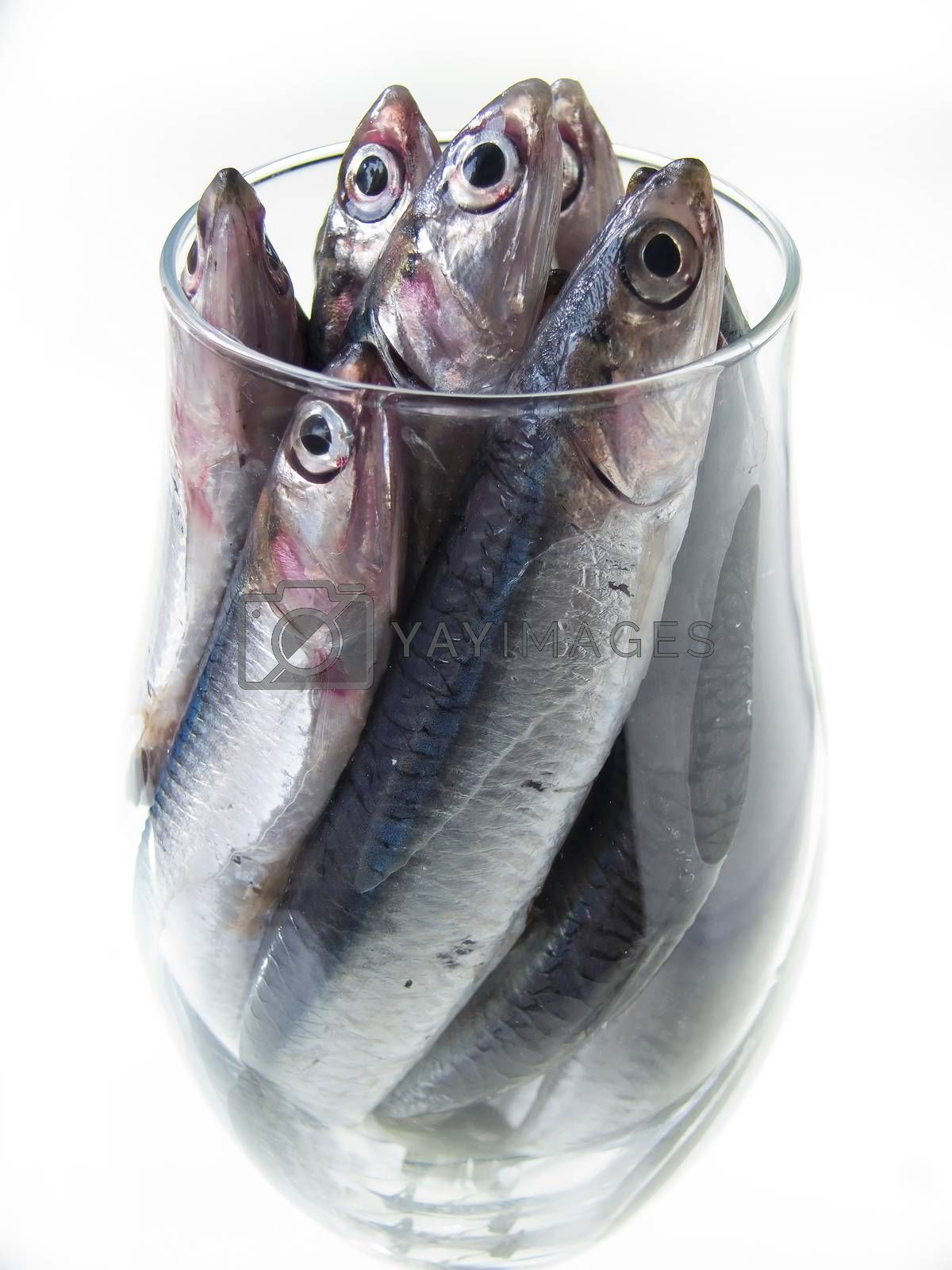 fish in the glass